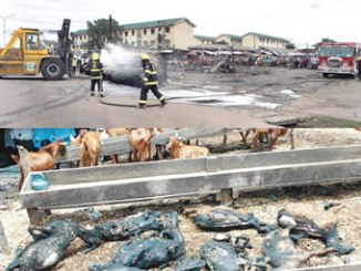 Men of the Lagos State fire service putting out fire at the scene of an accident involving a petrol tanker that caught fire at the abattoir entrance in Okooba, Agege area, on Tuesday. PHOTO: NAN. INSETnBELOW: Remains of goats burnt at the scene of an accident. photo: Nan