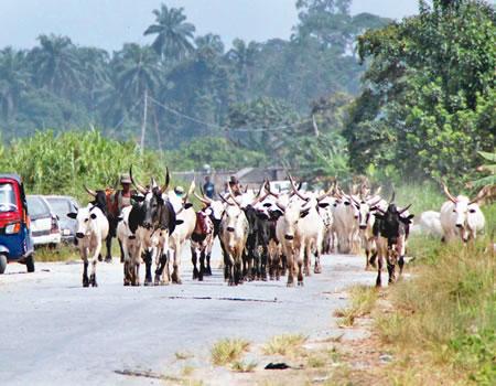 Southern Kaduna 2 Fulani herdsmen killed amid fears of renewed violence