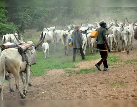 herdsmen,Oyo farmlands invaded by herdsmen
