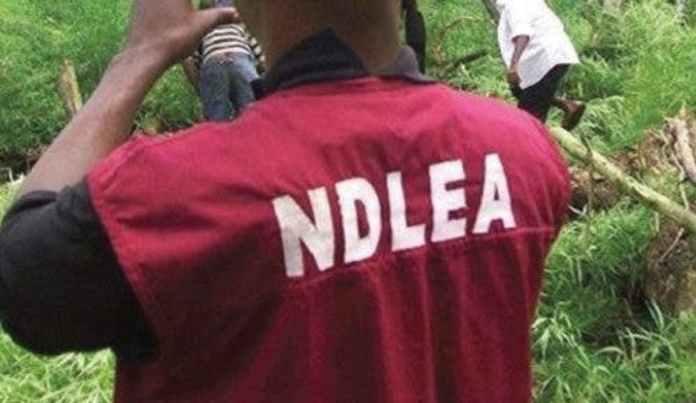 NDLEA arrests 60 suspects, NDLEA arrest drug traffickers, NDLEA intercepts heroin, NDLEA uncovers large farm of marijuana in Kano