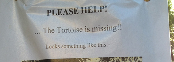 tortoise-is-missing-featured