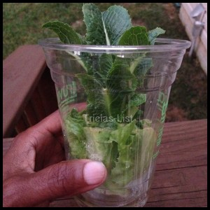 regrow your lettuce (12)