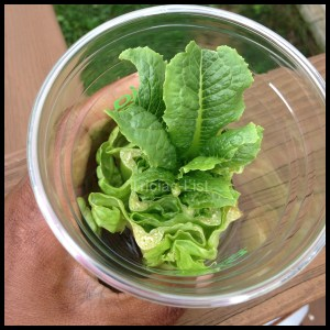 regrow your lettuce (9)