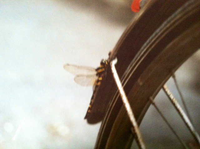 dragonfly-on-bike