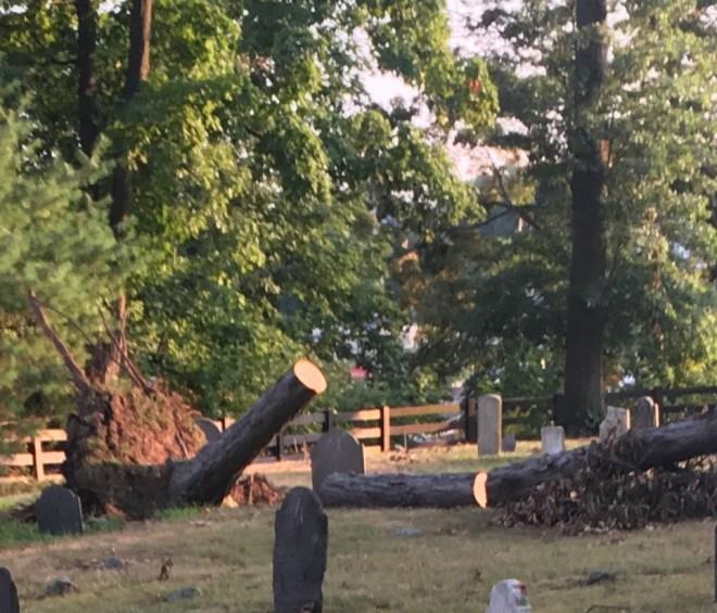 Tree damage in graveyard