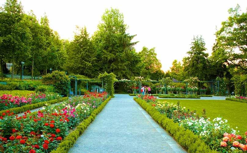 Image result for Zakir Hussain Rose Garden