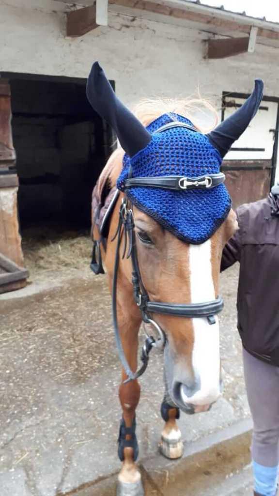 bonnet porté par le cheval