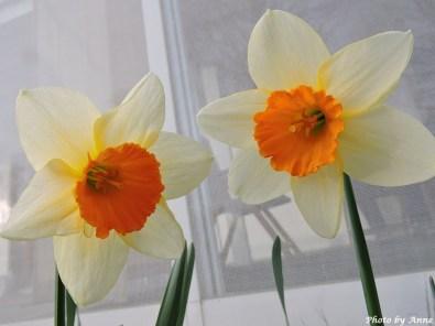Narciss4