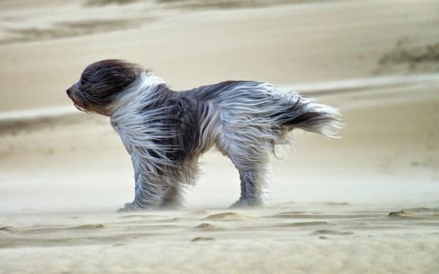 foto-hond-op-strand-met-harde-wind-hd-honden-achtergrond
