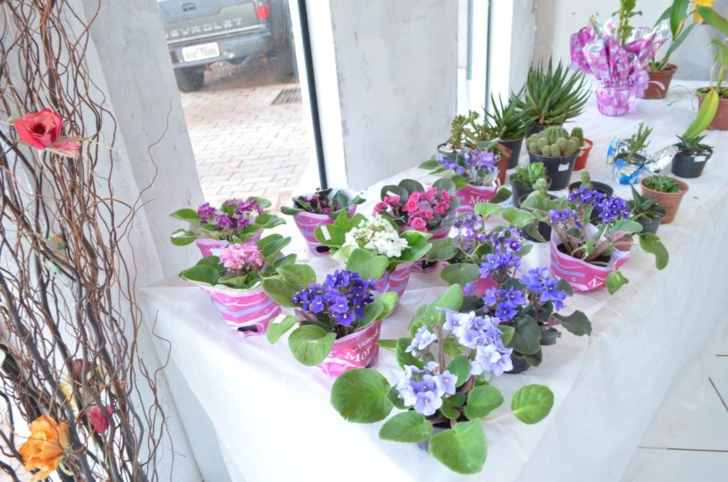 Exposição de orquídeas Mamborê
