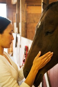 Giving Reiki to a lovely horse - Cassi!