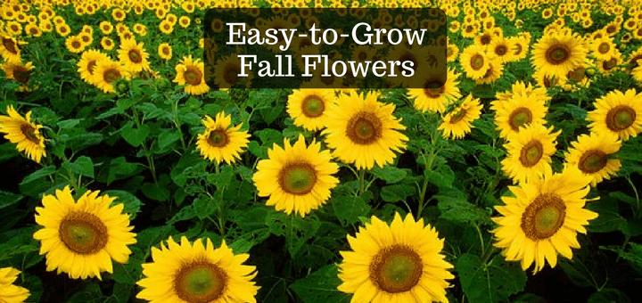 Easy to grow fall flowers trillium living easy to grow fall flowers mightylinksfo