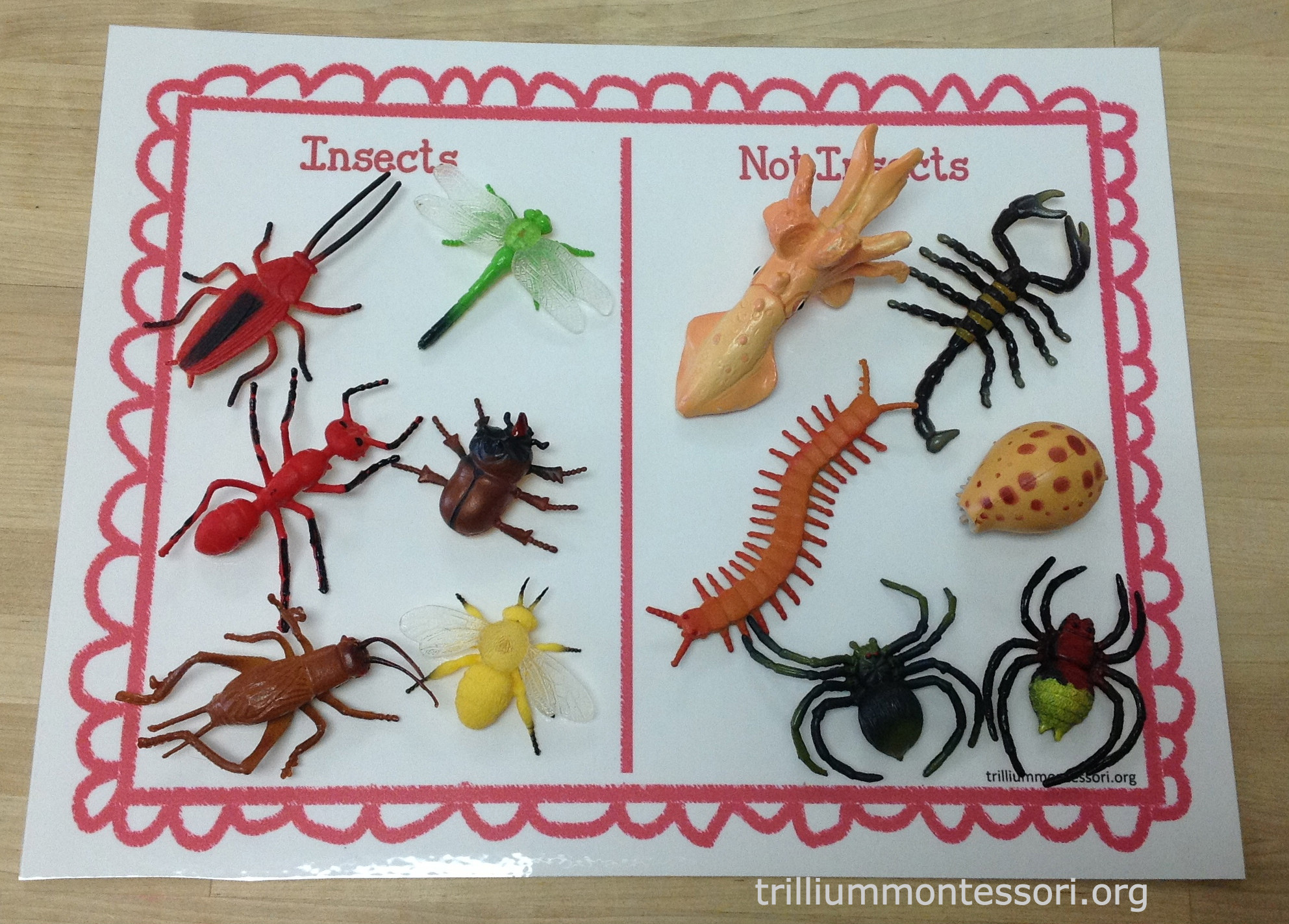 Learning About Bugs