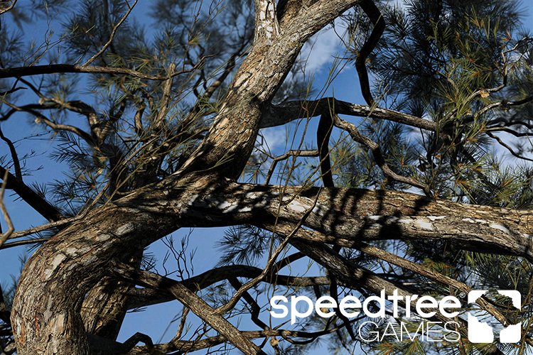 Speedtree 8 Finally Coming To Unity