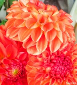 Carouge Famers Market Flowers Geneva