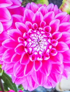 Carouge Farmers Market Flowers Geneva