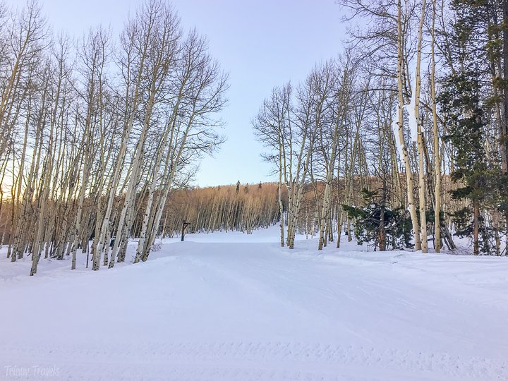 pretty winter wonderland of snow and aspen trees vail colorado