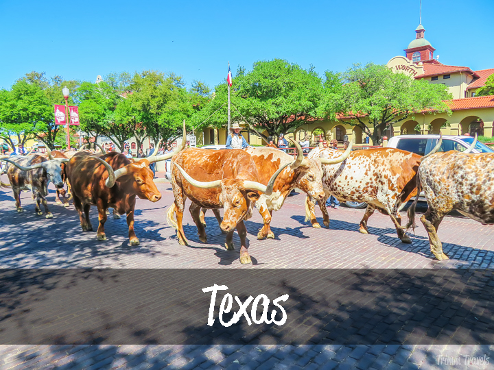 Trimm Travels: Texas