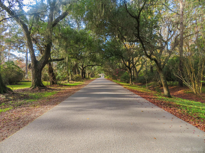 driveway of Magnolia Plantation and Gardens Charleston