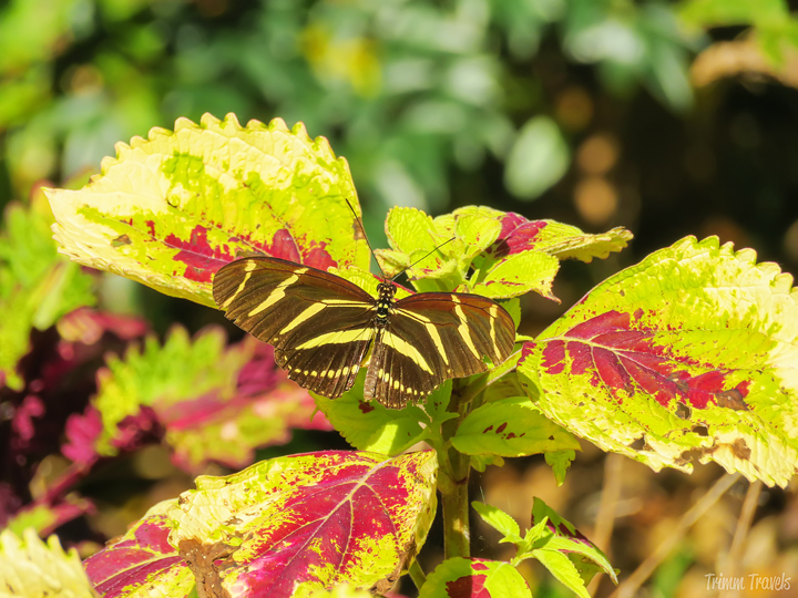 butterfly on red/yellow garden plant