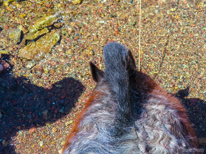 looking down at my horse's mane as he drinks water from a brook with colored pebbles