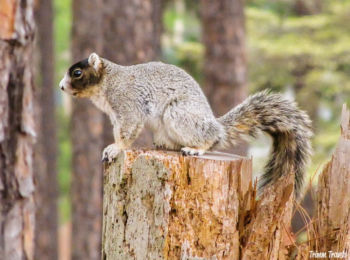 Squirrel in Pinehurst, North Carolina