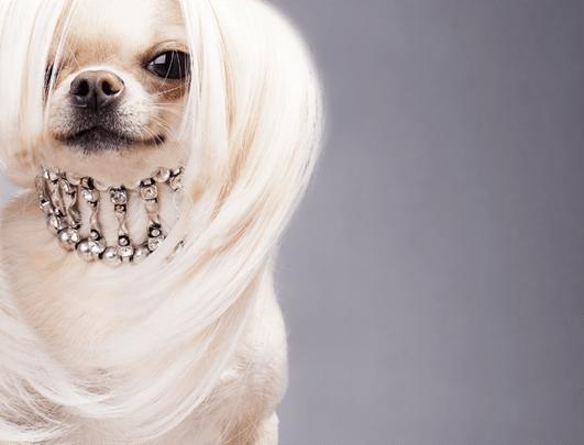 puppy's_knippen_scheren_behandelen