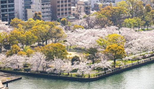 帝国ホテル大阪のリバービューから見る桜ノ宮の満開の桜