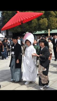 Stumbled upon a shinto wedding at Meiji Jingo!
