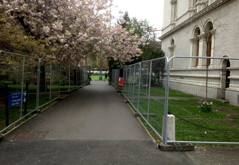 Trinity college trees cordened off 1