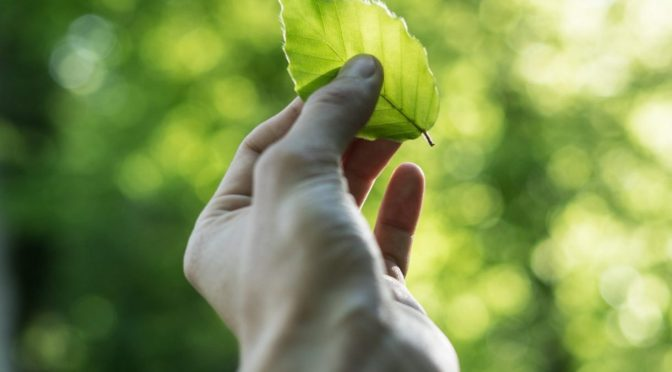 Man's hand holding a small green leaf with greenery surrounding