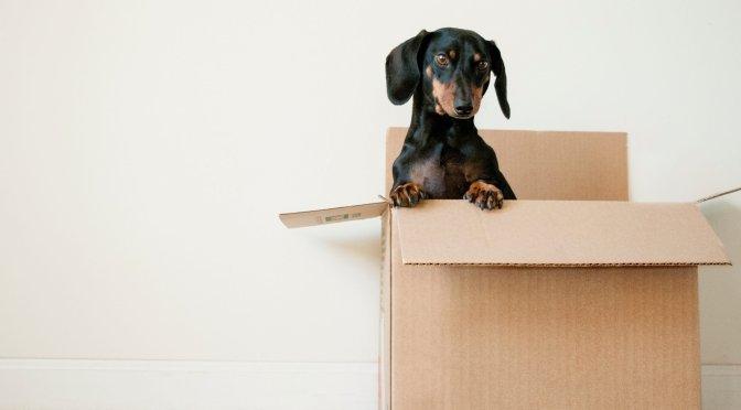 Small Black Dog inside Cardboard Box