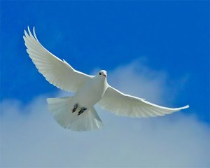 Dove of Psychic Messages and Knowledge