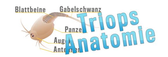 Triops_Allgemein_Anatomie_Banner