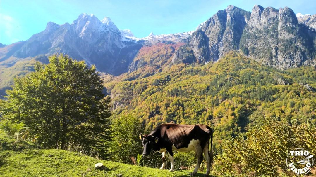 Livadhet e Gjarpërit (Valbona - Albania - Europa) ⋆ Trío Viajero