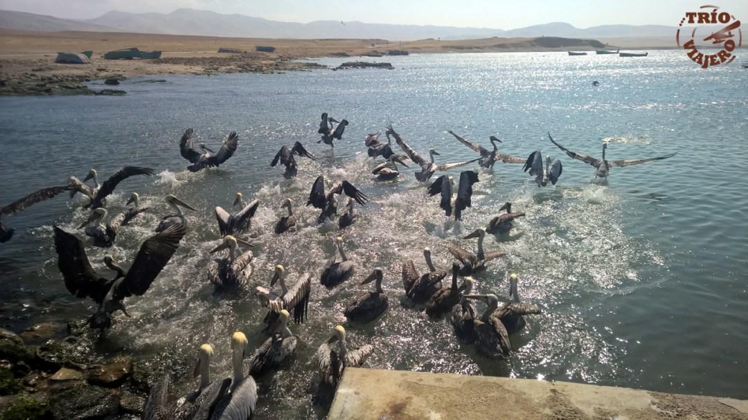 Reserva Nacional de Paracas (Paracas - Perú - América) ⋆ Trío Viajero