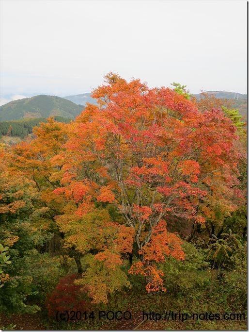 丸山の紅葉