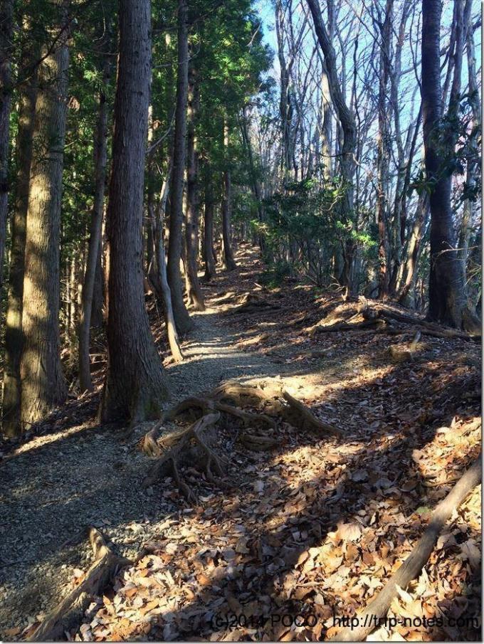 伊豆ケ岳への稜線