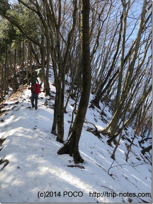 三頭山雪道
