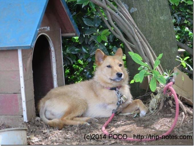 景信山の犬