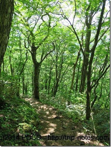 松手山コースの樹林帯