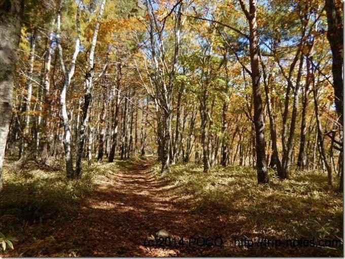 観音平周辺の森