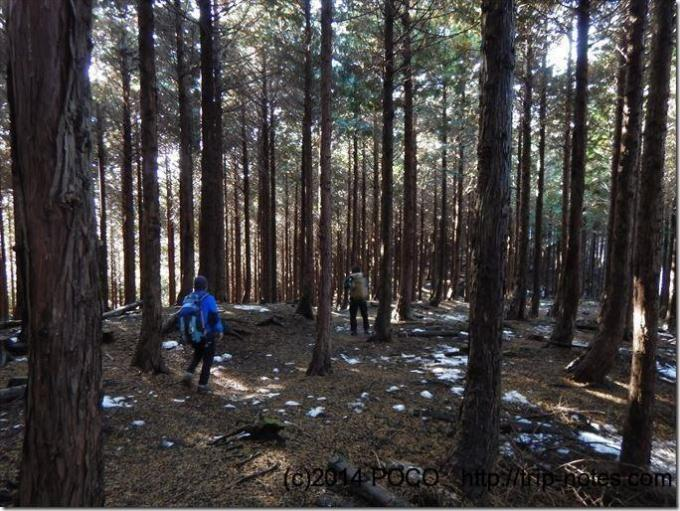 大野山から丹沢湖の登山道