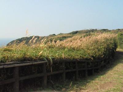 城ヶ島ハイキングコース