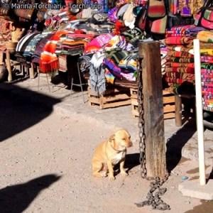 purmamarca-perrito