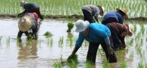 Возделывание земли Таиланд