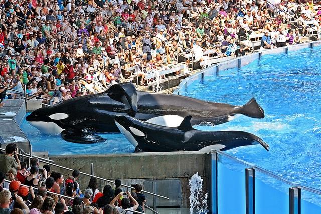 Image result for SeaWorld Orlando in Orlando