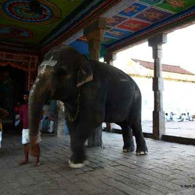 Elephant at Kumbeshwar Temple