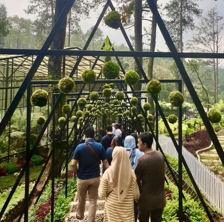 spot foto orchid forest cikole