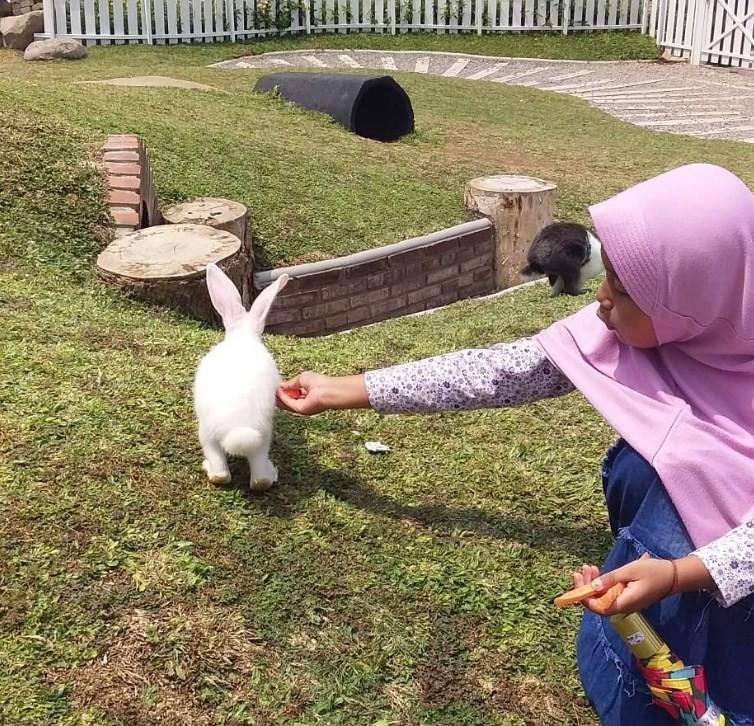 rabbit garden cimory prigen
